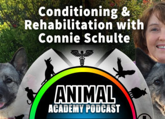Animal Academy Podcast: Connie Schulte – DPT, CCRP: Conditioning & Rehabilitation Expert Shares All