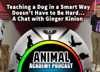 The Animal Academy Podcast: Are You Training Your Dog The Smart Way? Ginger Kinion Can Tell You How...