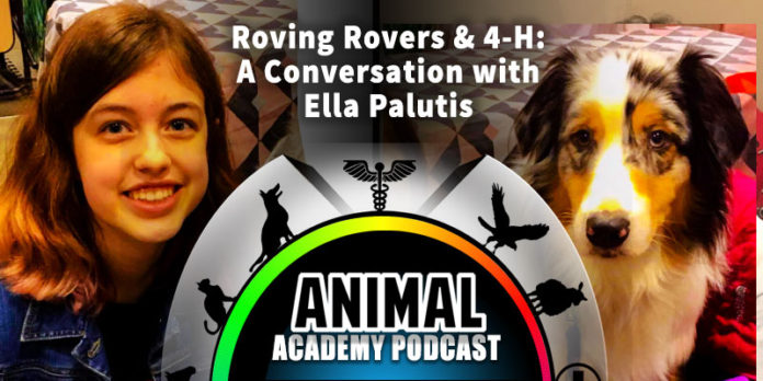 The Animal Academy Podcast: Ella Palutis Shares The 4-H Mission & Details Roving Rovers...