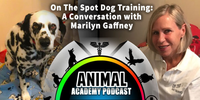 The Animal Academy Podcast: Marilyn Gaffney Tells Us All About On The Spot Dog Training...