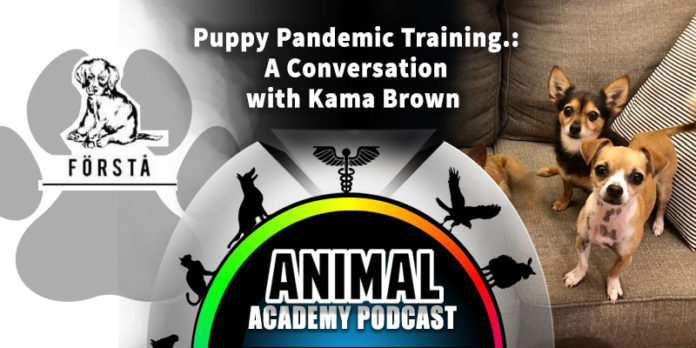 The Animal Academy Podcast: Puppy Training During the Pandemic: Kama Brown