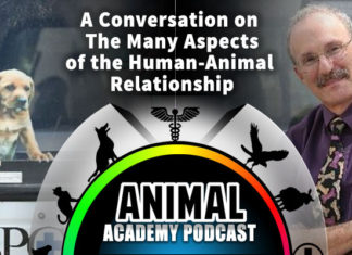 "The Animal Academy Podcast: Phil Arkow Explains ""The Link"" Between Animal Abuse & Human Violence"